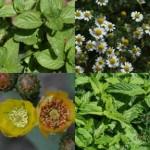 Ιδιότητες και χρήσεις αρωματικών φυτών και βοτάνων.