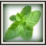 Καθαρισμός των πνευμόνων με λάδι μέντας (peppermint oil)