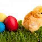 Βάφουμε τα πασχαλινά αυγά παραδοσιακά και οικολογικά