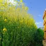 Τα φυτοφάρμακα και η καταστροφική επίδρασή τους στις μέλισσες