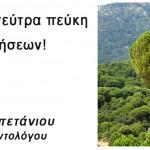 Κουκουναριά, η γητεύτρα πεύκη