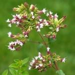Η χρυσή λίστα με τα 23 αρωματικά & φαρμακευτικά φυτά