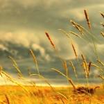 Διατροφή χωρίς γλουτένη: Oλα όσα πρέπει να γνωρίζετε