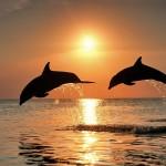 Πολλά Δελφίνια στο νερό!!