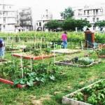 Κήπος εις τον κύβο