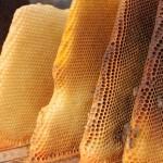 Οι κηρήθρες του μελισσιού (ο σκελετός)
