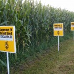 Έξι πράγματα που μπορεί να θέλετε να μάθετε για τους ΓΤΟ