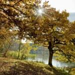 Η ξηρασία επηρεάζει περισσότερο τα μεγάλα δέντρα