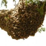 Ίχνη από κερί μελισσών σε αρχαία σκεύη αποκαλύπτουν την ηλικία της μελισσοκομίας