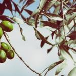 Το ελληνικό λάδι, πιο καλό για την υγεία