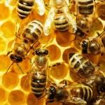 Η μπύρα μπορεί να σώσει τις μέλισσες από την εξαφάνιση;