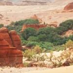 Το νέο «Σινικό Τείχος» αποτελείται από δέντρα