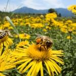 Η μελισσοκομία έχει ιστορία τουλάχιστον 8.500 -9.000 ετών