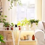 Καλλωπιστικά φυτά εσωτερικών χώρων