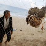 Καμπανάκι κινδύνου για τα μεταναστευτικά πουλιά του πλανήτη