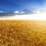 Ο νους είναι σαν ένα χωράφι: ό,τι σπείρεις θα θερίσεις