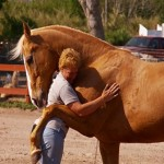 Τα άλογα αναγνωρίζουν τα ανθρώπινα συναισθήματα
