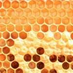 Πρακτικές συμβουλές για νέους μελισσοκόμους