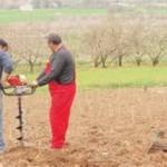 Εφάπαξ επιδότηση για φύτευση δένδρων