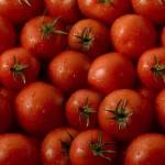 Ηλεκτρικό ρεύμα από… χαλασμένες ντομάτες