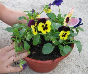 φυτό-σε-γλάστρα