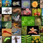 Αμέτρητα τα είδη ζωής στη Γη