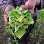 51 δωρεάν βιβλία για τις καλλιέργειες (λαχανικά, βότανα, δέντρα)