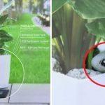 Αυτά τα φυτά φορτίζουν την μπαταρία του κινητού σου! (ΒΙΝΤΕΟ)