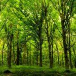 Τα δέντρα κοιμούνται, απεργούν και θερμαίνουν τον πλανήτη!