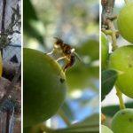 Παγιδέψτε το Δάκο της Ελιάς με Βιολογικές Παγίδες και Προστατεύστε τις Ελιές Σας!