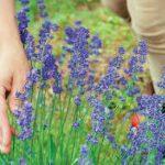 Αρωματικά φυτά: Πως να δημιουργήσετε τη δική σας μονάδα επεξεργασίας