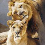Διαδηλώσεις σε όλο τον κόσμο για τα άγρια ζώα που απειλούνται με εξαφάνιση