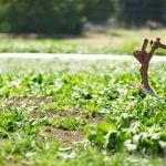 Η βιολογική γεωργία στα χέρια των αγροτών