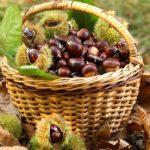 Συλλογή κάστανων και μανιταριών – Επιτρεπόμενες ποσότητες