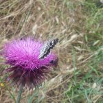Οι πεταλούδες ως δείκτες ποιότητας των πάρκων της πόλης!