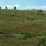 Η ιστορία της «άγριας γης» και η λεηλασία των δασών
