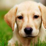 Τα 44 πιο famous ονόματα σκύλων!