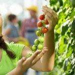 «Κατάνα»: Καινοτόμες ιδέες σε τρεις τομείς του αγροδιατροφικού τομέα