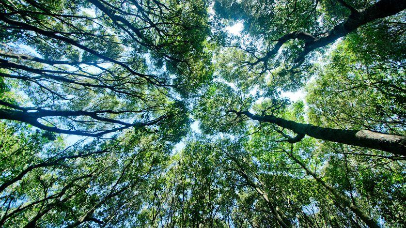 10 λόγοι που τα δάση είναι τόσο σημαντικά!