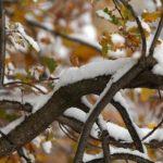 Πρώτη ημέρα του χειμώνα: 3 πράγματα που δεν γνωρίζετε για το χειμερινό ηλιοστάσιο