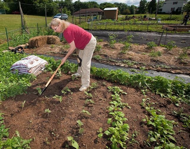 Πώς να αντιμετωπίσετε τα αγριόχορτα χωρίς την χρήση χημικών