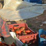 Eργόσημο : Τα ποσοστά εισφορών για τον εργάτη γης & για τον εργοδότη αγρότη
