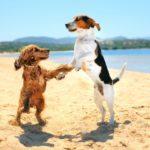 Καλοκαιρινή προστασία του σκύλου