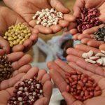 «Σποροφύλακες». Οι διασώστες των παραδοσιακών σπόρων και ποικιλιών.