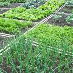 Ο Ζεόλιθος στον Λαχανόκηπο μας