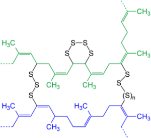 Schematic presentation of two strains (blue and green) of natural rubber after vulcanization with elemental sulfur.