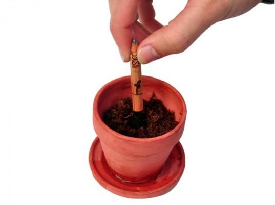 sprout-basil-pot-537x402